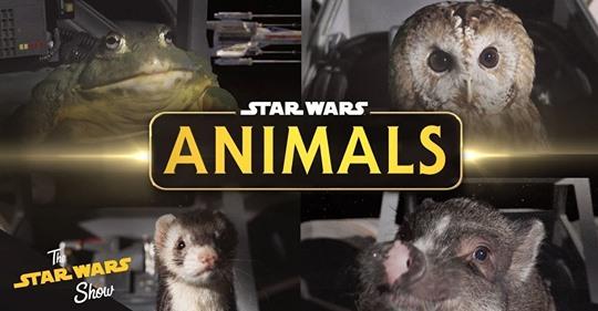 Star Wars animals