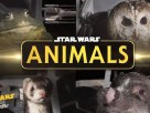 Star Wars animals