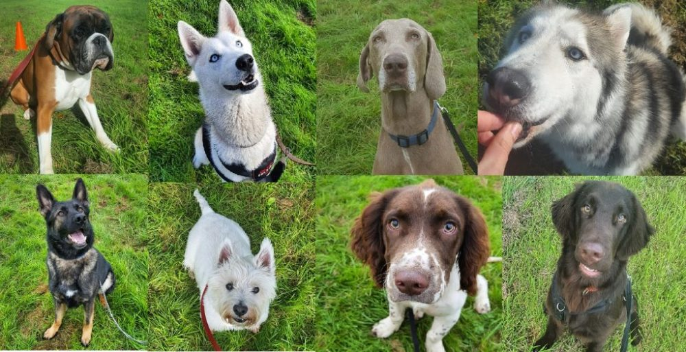 dog-collage