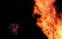 firesmarked