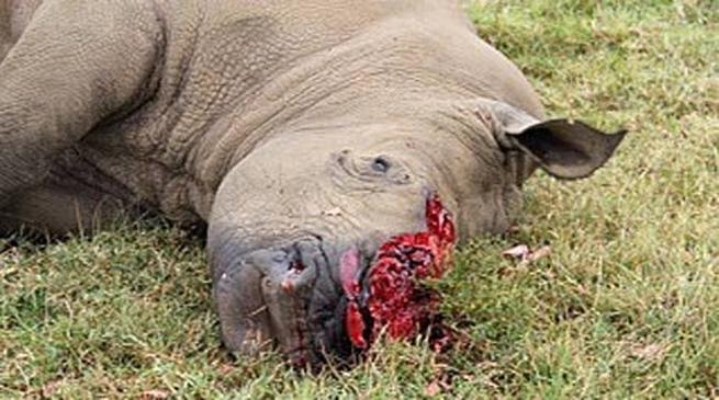 ओरांग राष्ट्रीय उद्यान में गैंडे की हत्या