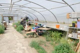 Film location nescot ewell epsom farm greenhouse