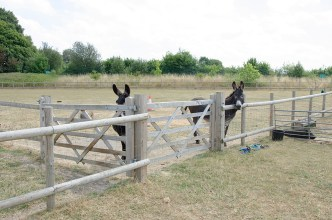 Film location nescot ewell epsom farm animals rustic