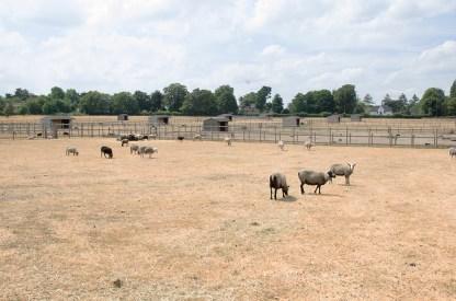 rustic farm animals