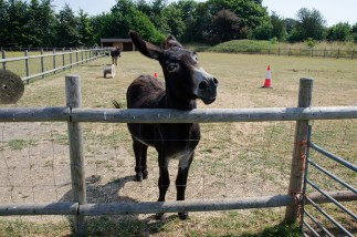 nescot film location ewell epsom surrey farm donkey