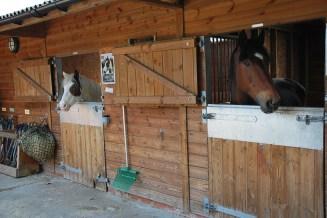 nescot film location ewell epsom surrey farm stables horses