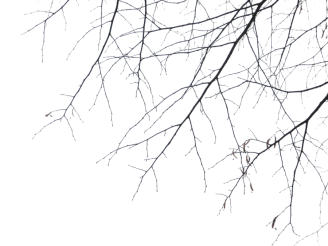 branches_png_by_simfonic-d355iva