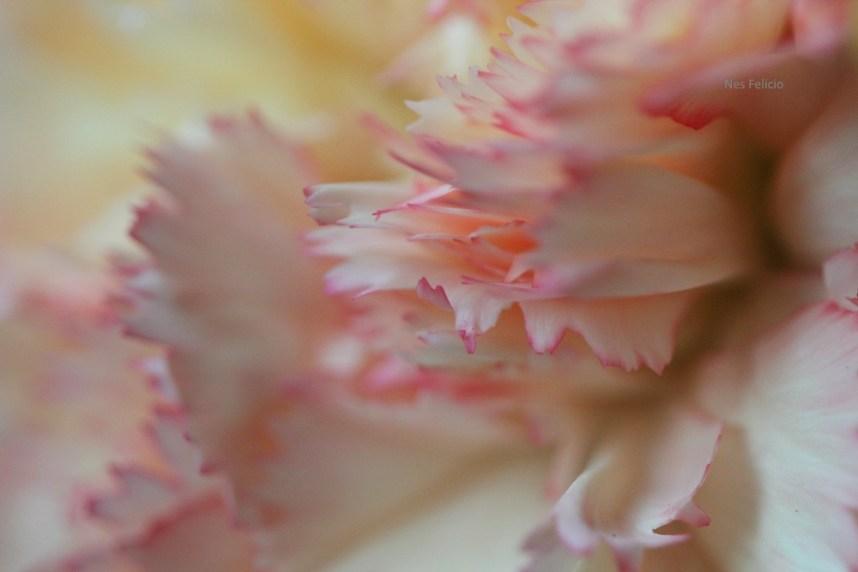 petal_2337