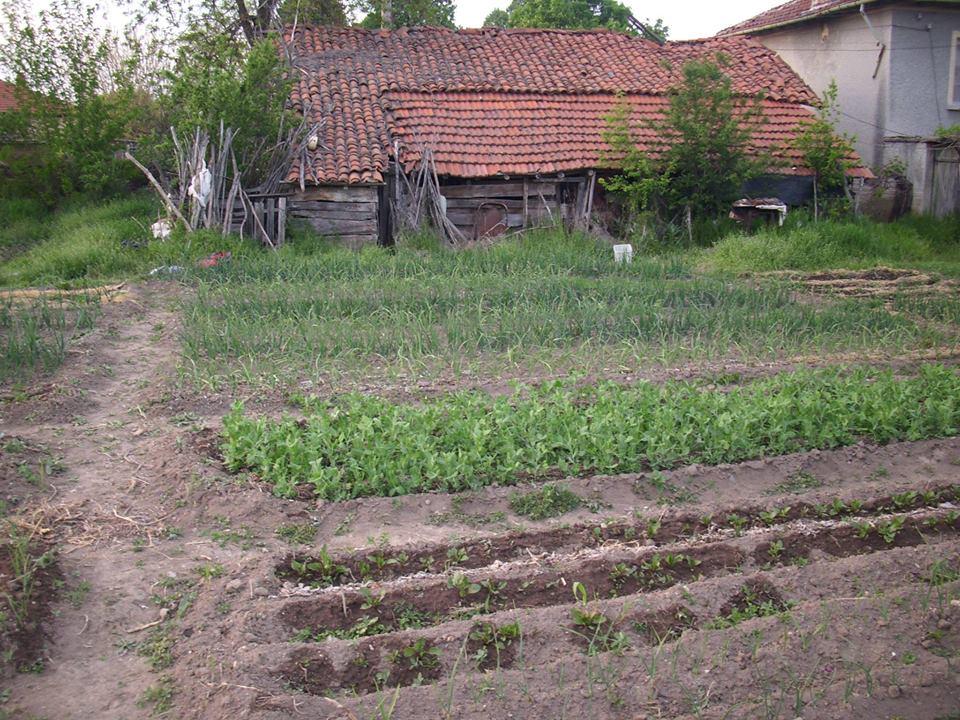 Работа със земята – първи градинарски опити