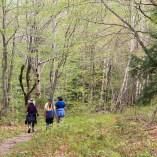 dance camp-nature retreat-nature walk-sacred dance-gathering