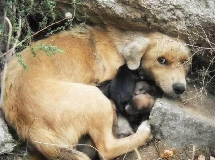 трогательные снимки мамочек животных и их малышей