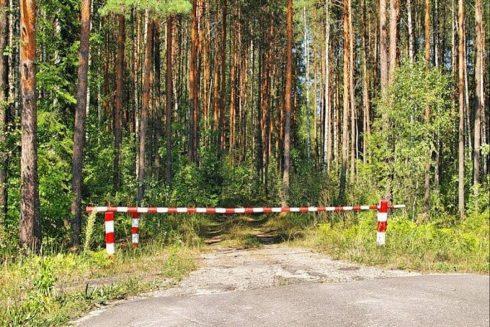 В Тольятти вводится ограничение на посещение лесов с 1 мая