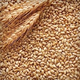 В Самарской области уничтожено более 1 тонны зерна