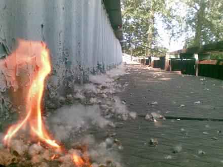 Тополиный пух: в Самаре действует особый противопожарный режим