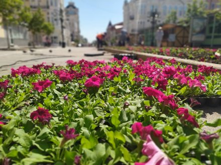 В Самаре на Ленинградской после аномальной жары восстанавливают цветники