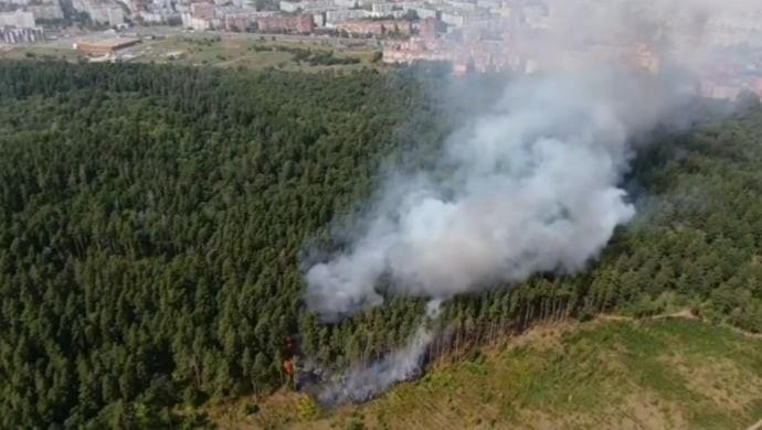 Три вопроса о защите леса Тольятти: в администрации города рассказали о профилактике лесных пожаров