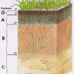 Horizon Diagram Soil Formation Basic Home Electricity Wiring Diagrams Factors Of Plymouth County Profile Development