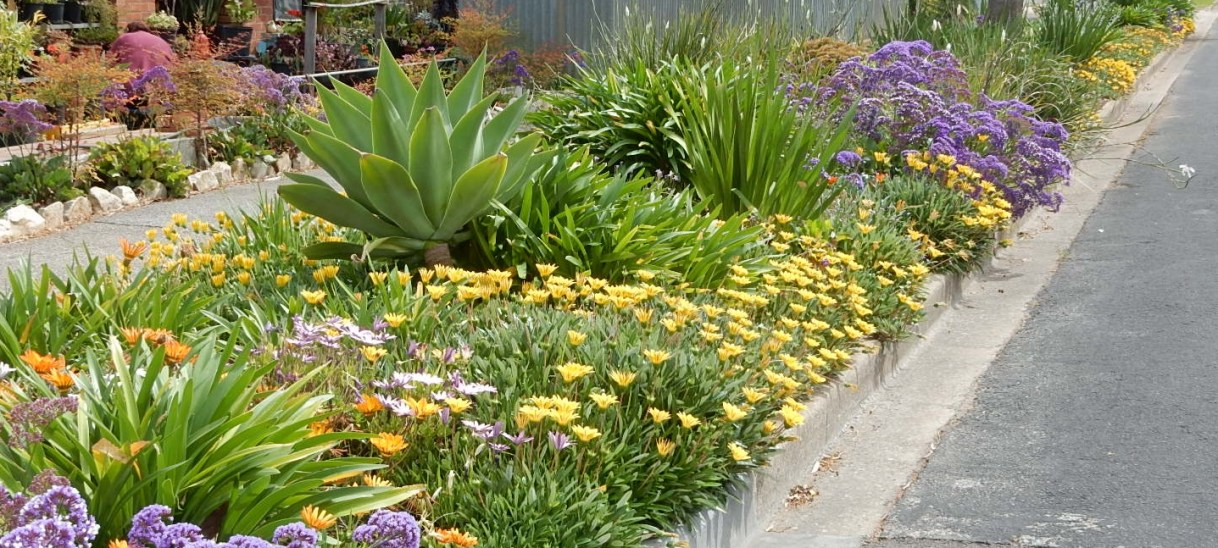 Looking to makeover your garden? Don't forget the humble nature strip