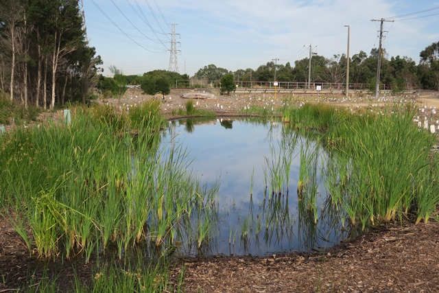Urban wetlands: promoting their conservation and cultural value
