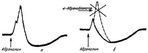 α-адреноблокаторы снижают тонус гладкой мускулатуры в предстательной железе, опосредованный через α -1-адренергические рецепторы