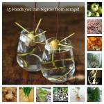 Food That Can Be Grown From Scraps
