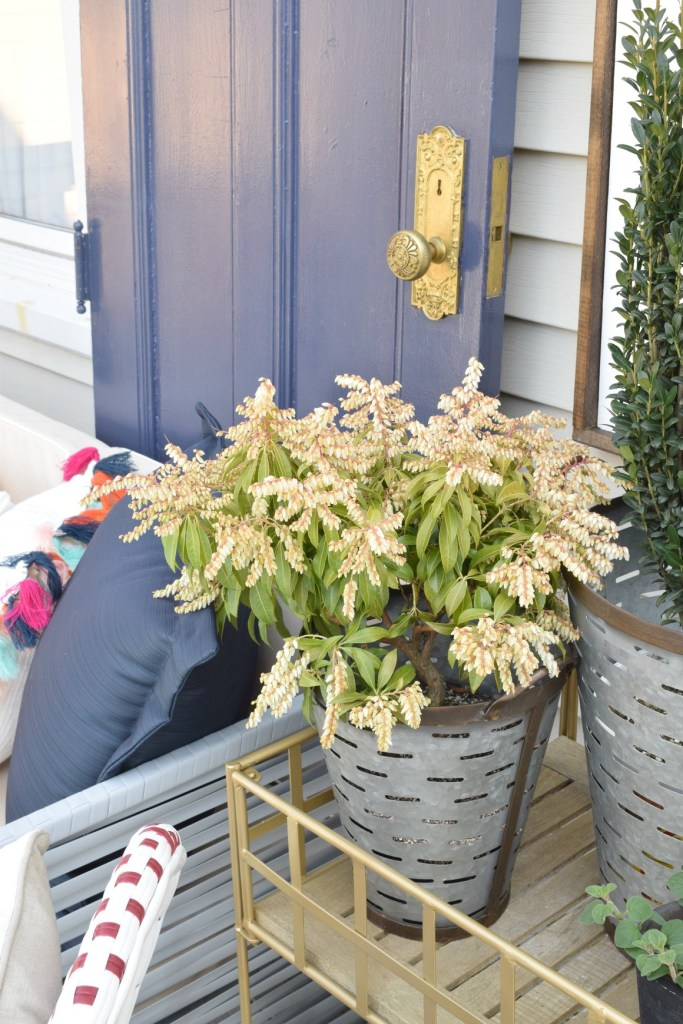 backyard ideas and plants for patio