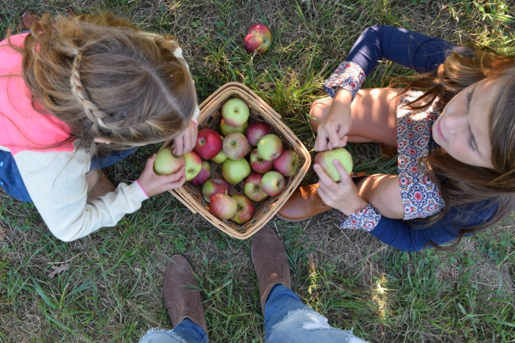 2- When apple picking you can be shaded by the apple trees, making it much cooler. Make sure to bring jackets to layer on, so you don't have to cut your trip short.