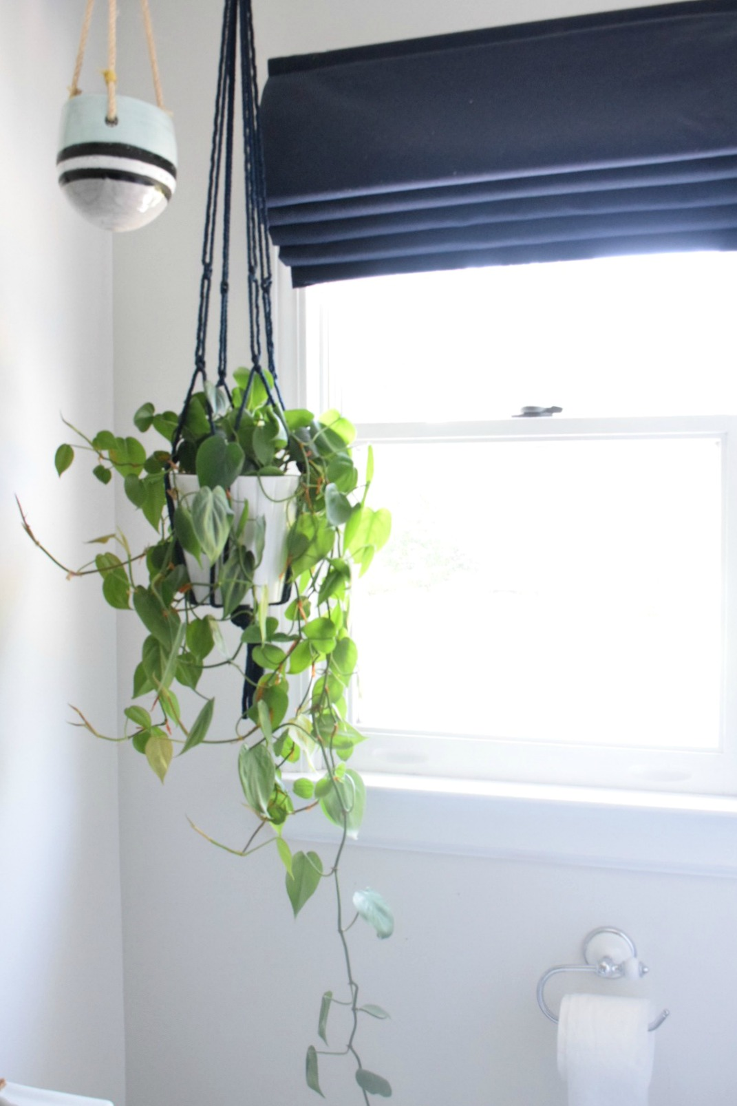 5 house plants that are low maintenance my tips on keeping them alive nesting with grace. Black Bedroom Furniture Sets. Home Design Ideas