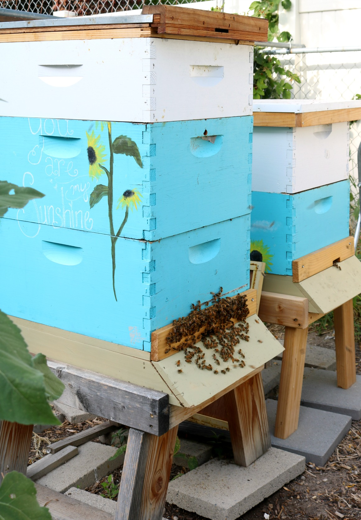 Bee Keeping- Must Read before getting BEES! - Nesting With ...