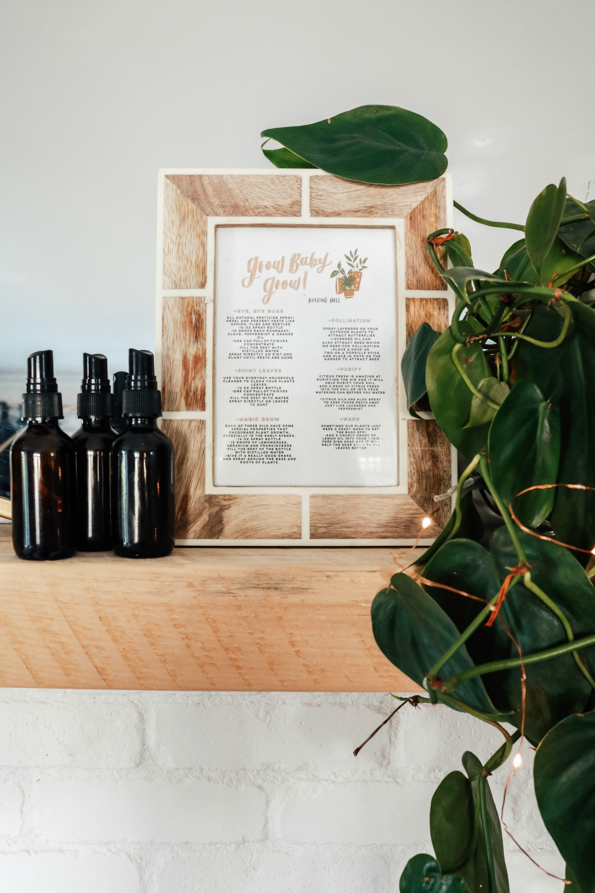 Using Essential Oils On Houseplants Keep The Bugs Away And Grow