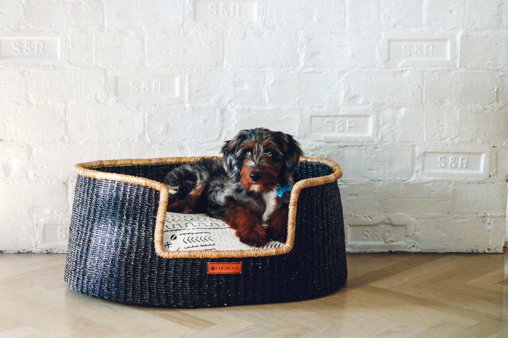 Dog Beds- Australian Doodle- Australian Doodle- Favorite Dog Things- 1