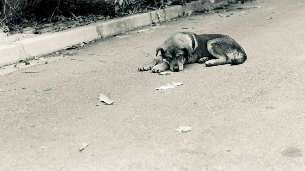 Vildhundens rädsla