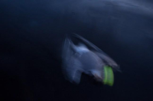 1:38 A dead bird with fishing lure in it's peak.