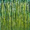 Evergreen Garden (2020) by Nestor Toro / 35x46 inches