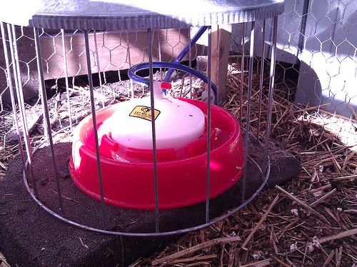 Adding an auto-waterer to a rain barrel for our backyard chickens