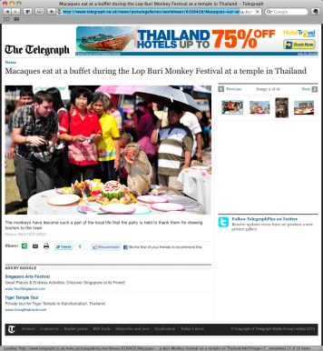 **TEARSHEET FROM THE TELEGRAPH WEBSITE** A monkey eats a watermelon during the annual 'monkey buffet festival' at the Phra Prang Sam Yod (The Three Crests Phra Prang) in Lopburi province. The festival is held annually on the last Sunday of November to promote tourism.