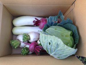 野菜セット詰め合わせ