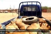 Abattage de chiens errants à Ouagadougou: La chasse a été bonne