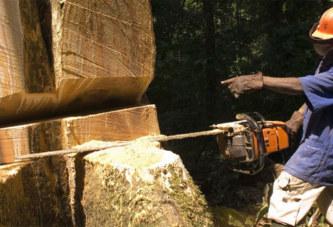 La Chine fait main basse sur les forêts africaines