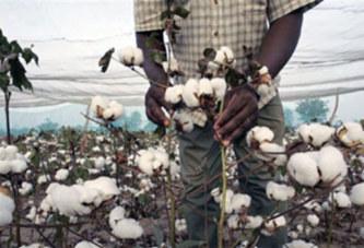 Une augmentation de 10 francs CFA pour relancer la production de coton au Burkina Faso