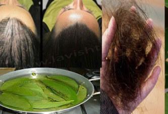 Les feuilles de goyave peuvent arrêter à 100% votre perte de cheveux et les faire pousser comme jamais