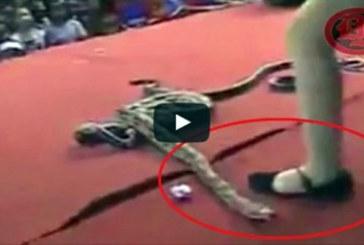 Une chanteuse meurt après avoir été mordue par un cobra sur scène  (vidéo)