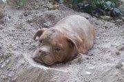 Il enterre sa chienne vivante: 8 mois de prison avec sursis