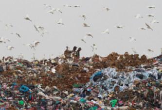Sierra Leone : une foule se rue sur des poulets avariés enterrés dans une décharge
