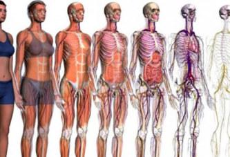 Voici 06 organes vitaux du corps humain, qui une fois touchés, peuvent vous tuer en 24h