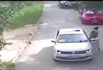 Femme dévorée par un tigre dans un zoo : la vidéo (attention aux personnes sensibles)