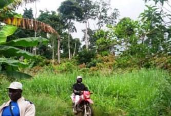 Côte d'Ivoire – Mont Péko : Les burkinabé sommés de quitter les lieux