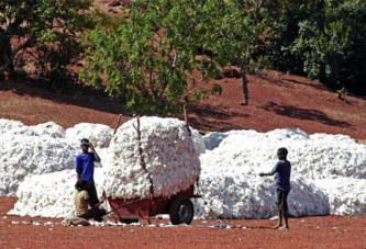 Le Burkina dit stop au coton OGM de Monsanto.. et fait une super récolte