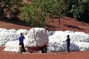 Burkina Faso: Le prix du coton graine passe de 235 à 245 F CFA