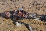 (Photos) Le cadavre d'une sirène découvert sur une plage